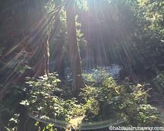 Sunshine Fraser Valley Forest