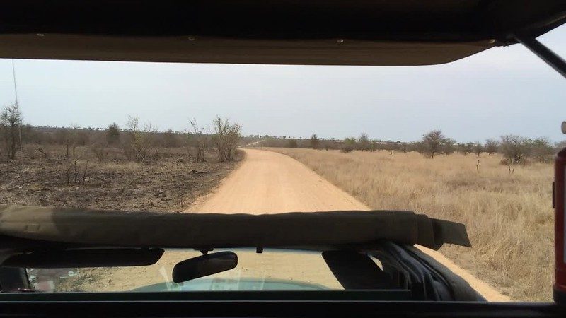 Openness at Kruger.