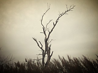 lonely tree - reaching for the sky
