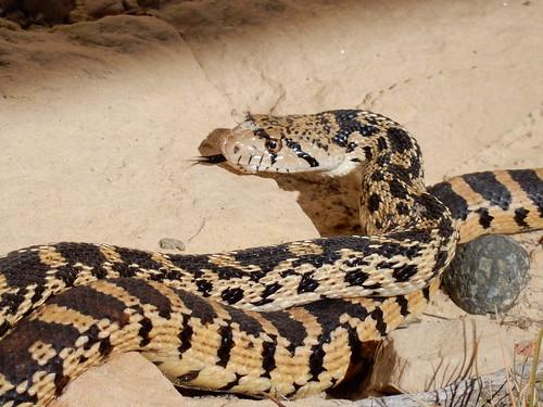 El Morro National Monument - slangen