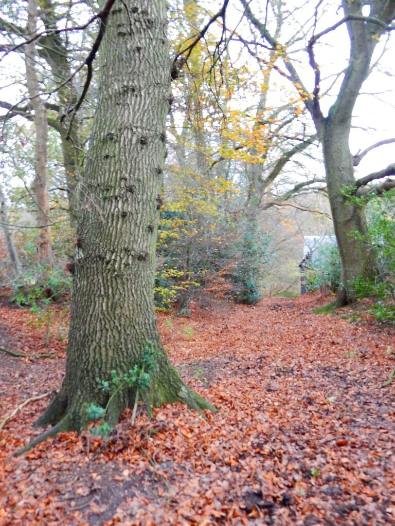 Leaves on the ground Princes Risborough to Great Missenden