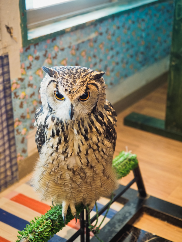 Lucky-Owl-Cafe-Osaka-40