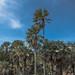 Lençóis Maranhenses - Babassu Forest
