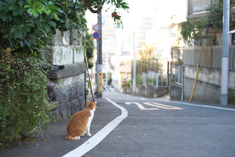 東京路地裏散歩 ネコ 2015年12月20日
