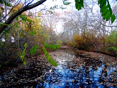 Wantagh - Twin Lakes Preserve - Autumn (30)