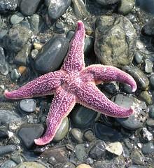 animal(1.0), marine biology(1.0), invertebrate(1.0), marine invertebrates(1.0), fauna(1.0), starfish(1.0),