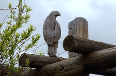 Ranches, Lone Hawk