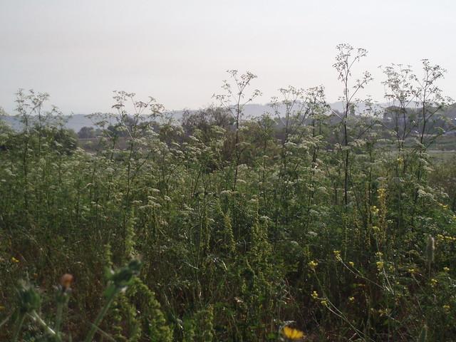 Wetlands Of Watsonville Nature Center