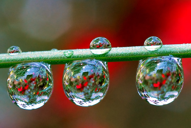 Dew Drop Refraction - a gallery on Flickr