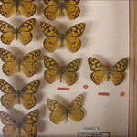 Type Species - Behind the sceans in the Entimology department - Museum of Australia