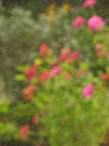 Garden Through Rain Soaked, Foggy Window by Sue Richards