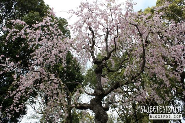japan tokyo trip ueno park 28