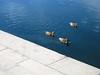 Ducklings by Pagynwb