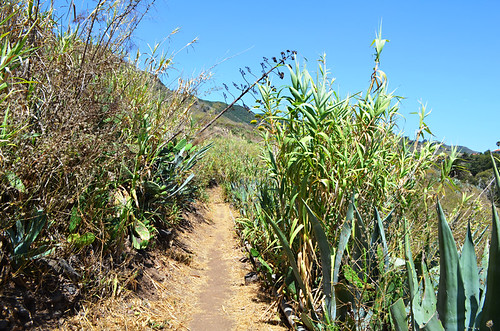 Path through cane, Tegueste, Tenerife