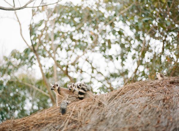 RYALE_Madagascar_Blog2_040