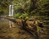 Beauchamp falls,Otway ranges