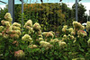 Flowers pt. 2, Seattle by Sara Shroyer