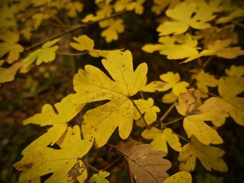 Herbst !!!