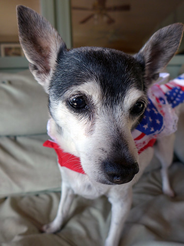 2015-10-17 - Mags (isn't feeling too patriotic) - 0015 [flickr]