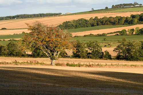 autumn sunset shadow sky sun black tree fall field barley sunshine sunrise landscape scotland highlands shadows outdoor farm stmartins fields isle beech blackisle scottishhighlands resolis