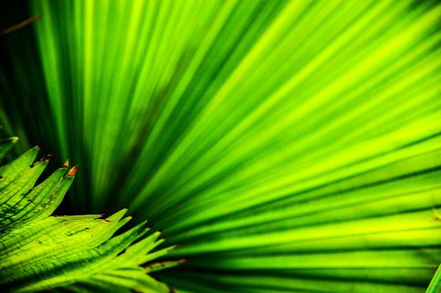 green is spreading [Explore]