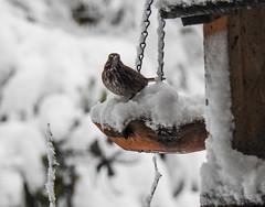 Snowbird 3 - Snowpocalypse 2017_12