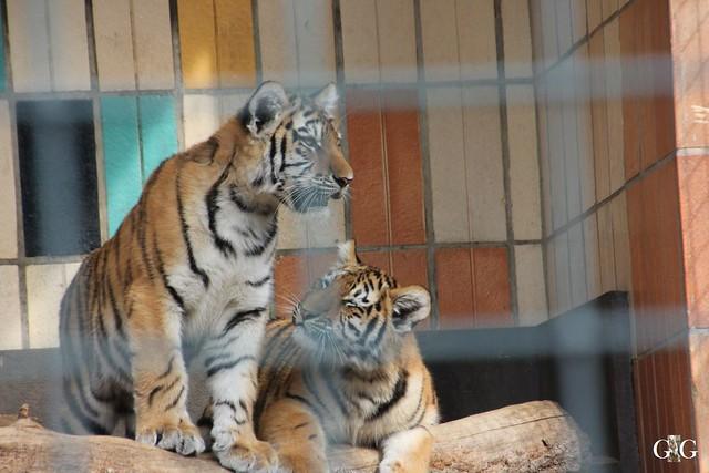 Sonntags-Besuch im Tierpark Friedrichsfelde 04.10.201581