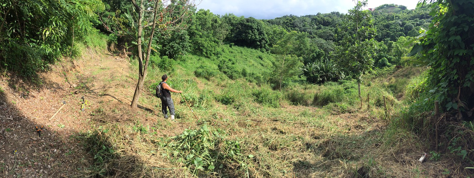 Jungle Clearing and Puerto Rican-isms