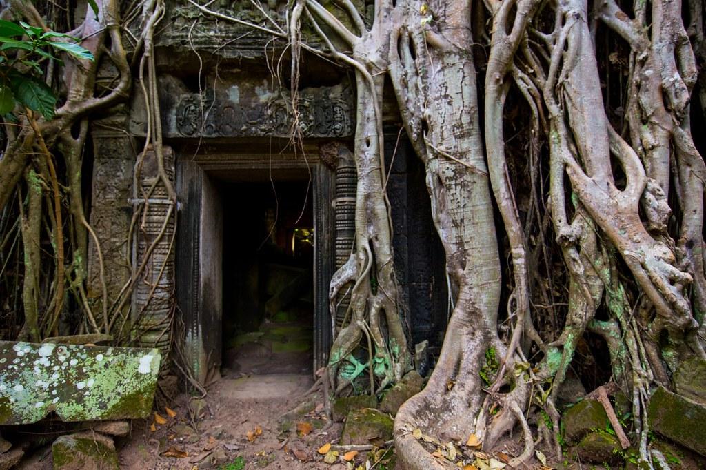 Ta Prohm Angkor-2823