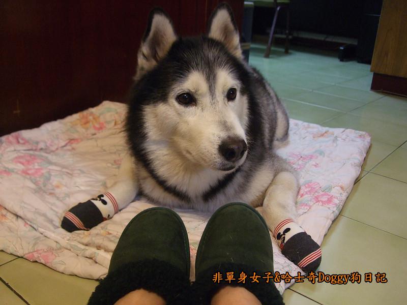 Doggy穿兒童襪01
