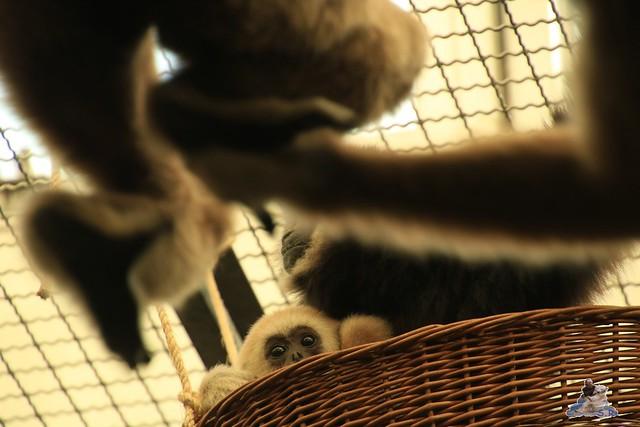 Tierpark Berlin 22.11.2015   0124