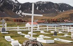Whaler's graveyard, Grytviken, South Georgia Island
