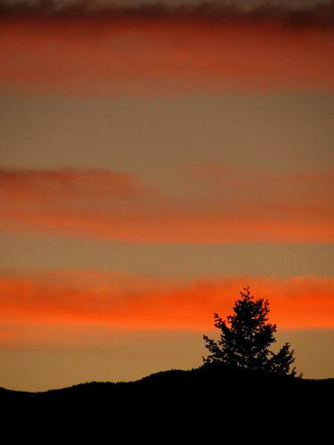 sunset sky orange cloud canada tree silhouette britishcolumbia beautifullight 100v10f afterglow eastkootenay