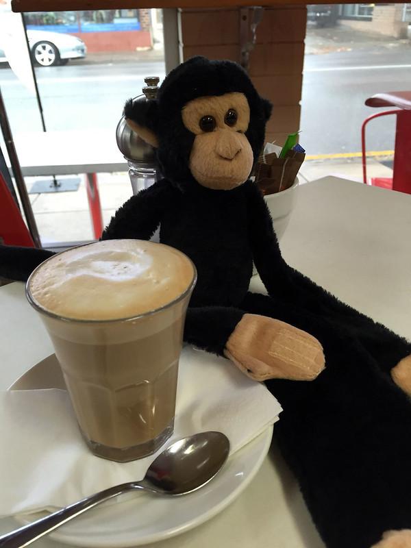 Monkey has a cuppa