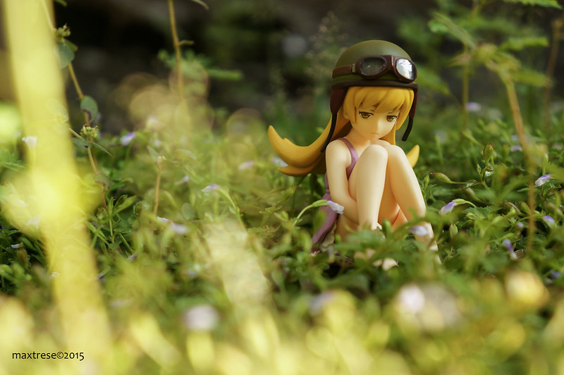 Figfix Shinobu in the garden