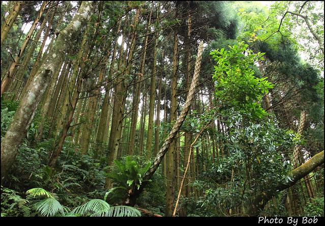 新竹旅遊-馬武督森林116