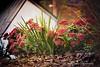 seedum leaves clairity use-2
