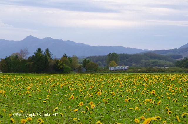 ヒマワリ to 列車 1