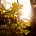Sun by Jostein Nilsen Photography