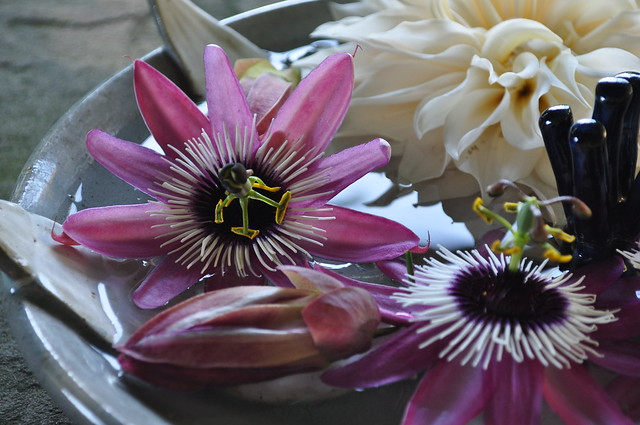 Floating Passiflora Blossoms (Chanticleer House) (2)