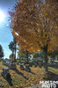 Autumn Cemetary Stroll
