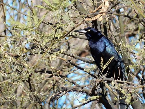 Patagonia Lake State Park - bird