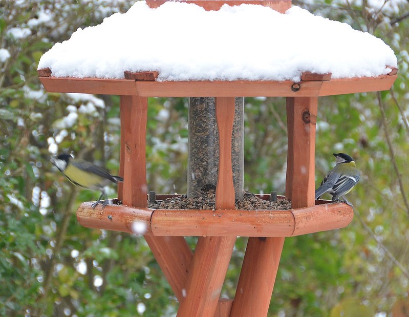 Birds in garden house