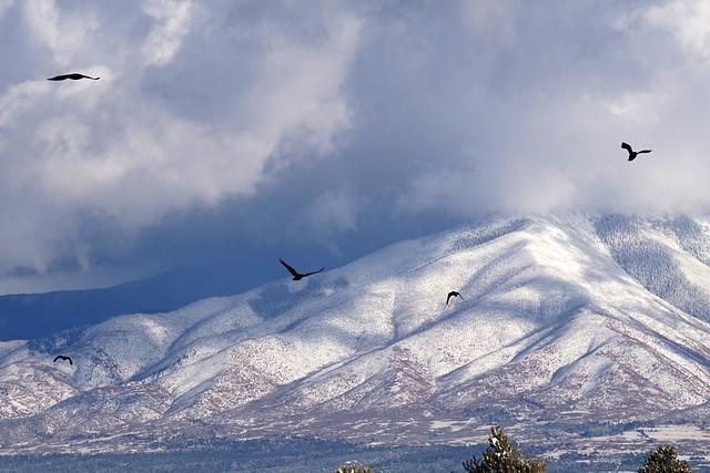Winter Ravens 1
