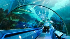 ... walking with the Sharks ... Real People Architecture Built Structure Water Travel City Tunnel Indoors  People Aquarium Fish Fun Family Fun Blue Under Water Swimming Fish Tank Transparent Entertainment Family Weekend Marine Life Marine Fish