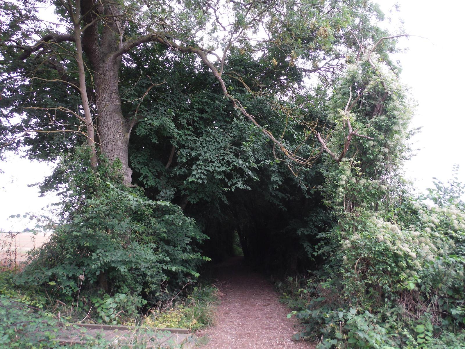 Covey's Lane (II) SWC Walk 164 Roydon to Sawbridgeworth via Henry Moore Foundation