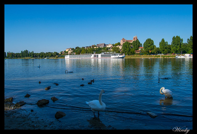 Día 2: Friburgo, Vogelgrun, Eguisheim, Colmar - Río Rin y Breisach am Rhein