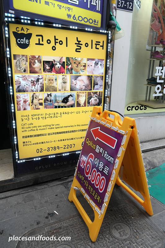 cat cafe playground seoul cat signage