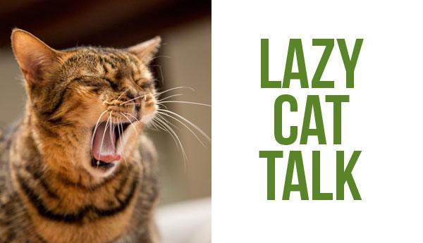 lazy-cat-talk