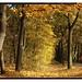 bunter Herbst *2 by sawis.fotoecke